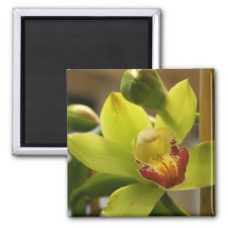 Ímã da orquídea ímã quadrado