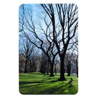 Ímã das árvores de olmo americano