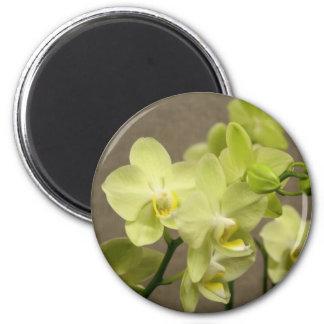 Ímã das orquídeas ímã redondo 5.08cm
