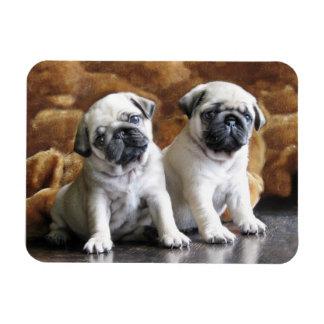 Ímã de dois Pugs