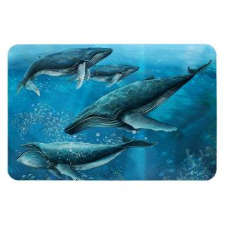 Ímã de Flexi das baleias do recife de corais