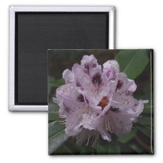 Imã de geladeira da flor do rododendro