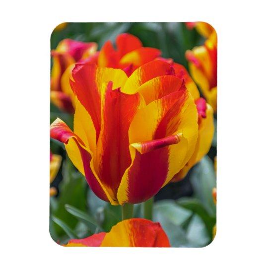 Imã de geladeira das tulipas de Banja Luka Ímã