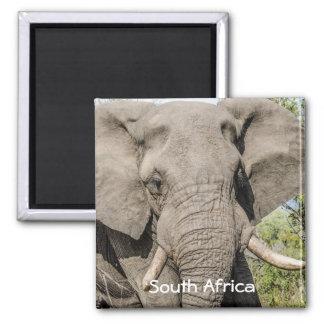 Imã de geladeira do elefante - África do Sul