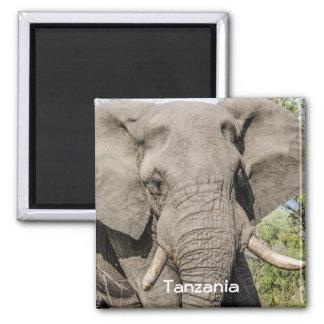 Imã de geladeira do elefante - Tanzânia