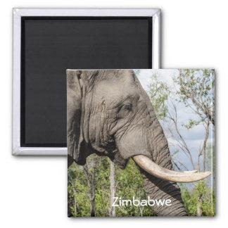 Imã de geladeira do elefante - Zimbabwe