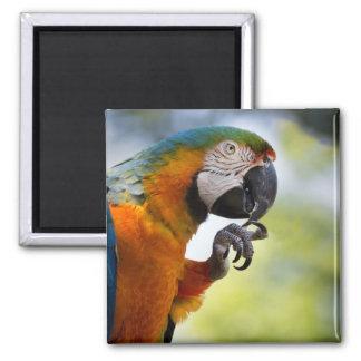 imã de geladeira do macaw