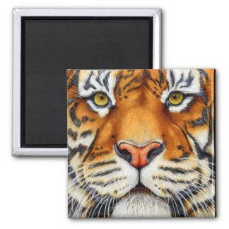 Imã Demasiado perto - ímã do tigre Siberian