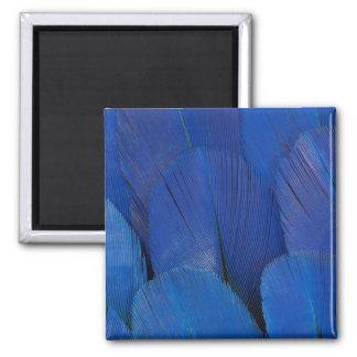 Imã Design azul da pena do Macaw do jacinto