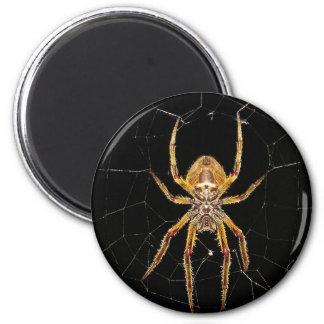 Imã Design da aranha