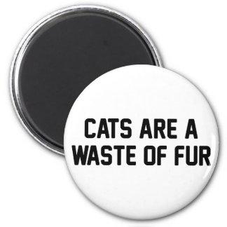 Imã Desperdício dos gatos da pele