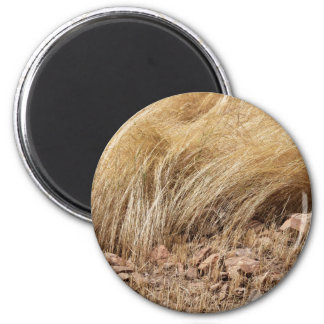Imã Detalhe de um campo do teff durante a colheita