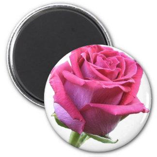 Ímã do botão do rosa do rosa ímã redondo 5.08cm