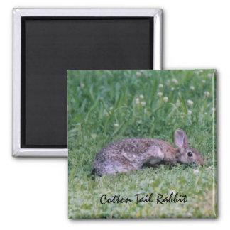 Ímã do coelho da cauda do algodão ímã quadrado