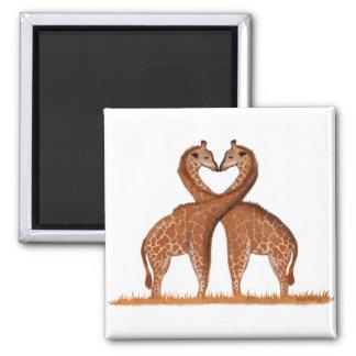 Ímã do coração do amor dos girafas imã