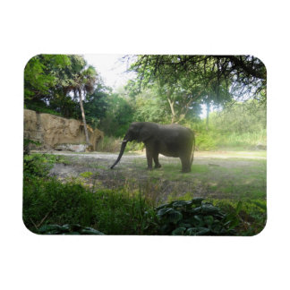 Ímã do elefante #2