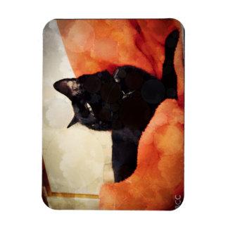 Ímã do gato preto