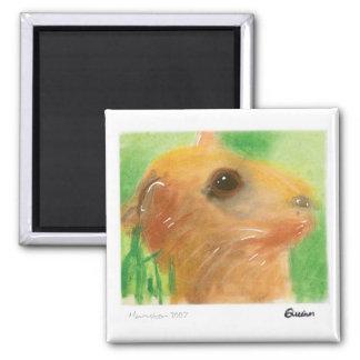 Ímã do hamster ímã quadrado