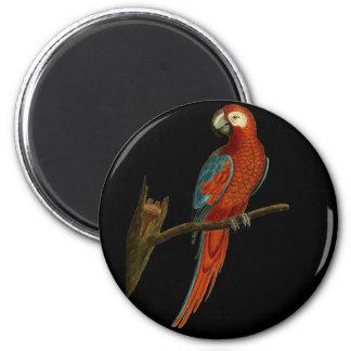 Ímã do papagaio do Ara Ímã Redondo 5.08cm