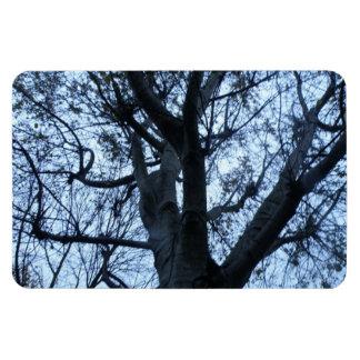 Ímã do prêmio da fotografia da silhueta da árvore