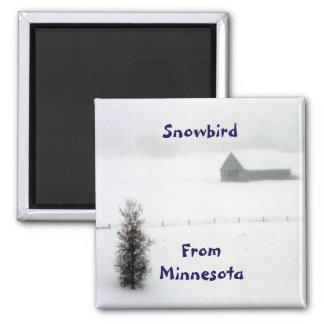 Ímã do Snowbird de Minnesota Ímã Quadrado