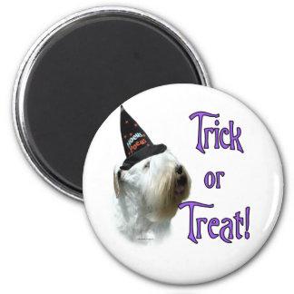 Imã Doçura ou travessura de Sealyham Terrier