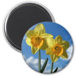 Imã Dois Daffodils amarelos 2,2