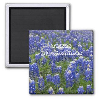 Ímã dos Bluebonnets da flor de estado de Texas Ímã Quadrado