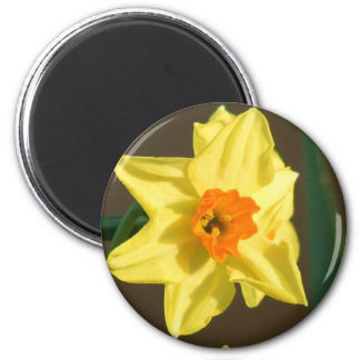 Ímã dos Daffodils Ímã Redondo 5.08cm