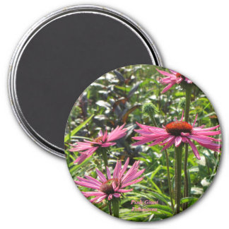 Imã Echinacea gigante cor-de-rosa
