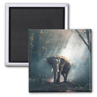 Imã Elefante asiático em um esclarecimento Sunlit da