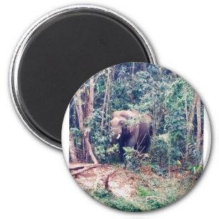Imã Elefante em Tailândia