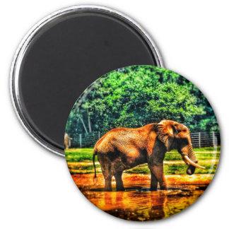 Imã elefante fullsizeoutput_1104