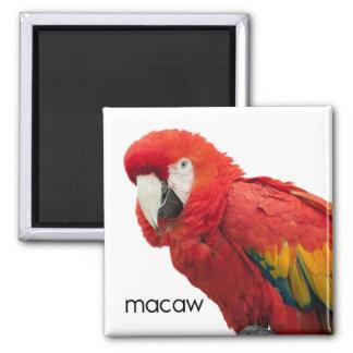 Imã Escarlate do pássaro do Macaw