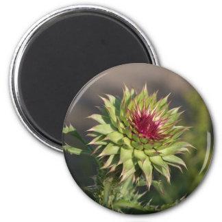 Ímã espinhoso da flor ímã redondo 5.08cm