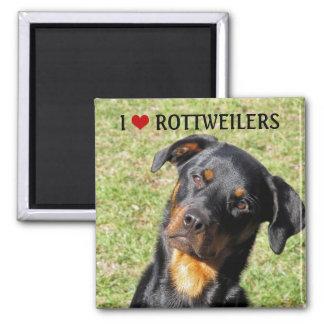 Imã Eu amo o ímã de Rottweilers