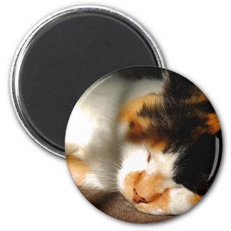 Imã Exposição ao sol do gato de chita