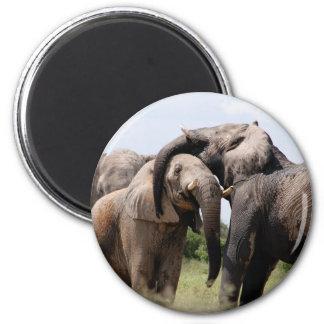 Imã Família do elefante de África