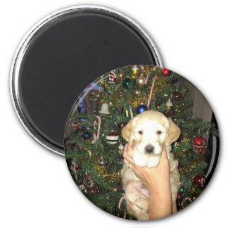 Imã Filhote de cachorro de GoldenDoodle com árvore de