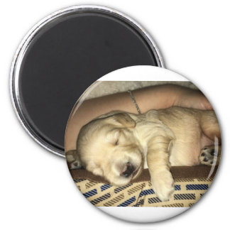 Imã Filhote de cachorro do sono GoldenDoodle