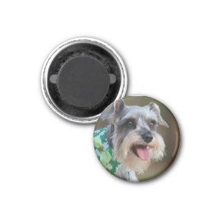 Imã Filhote de cachorro feliz do Schnauzer diminuto