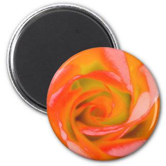 Imã Fim-acima cor-de-rosa da laranja