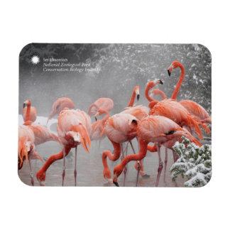 Ímã Flamingos de Smithsonian | na neve