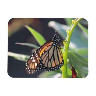 Ímã flexível da foto da borboleta de monarca