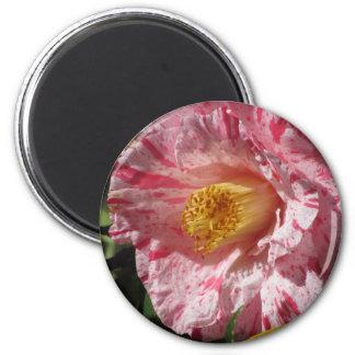 Imã Flor branca listada único vermelho da camélia