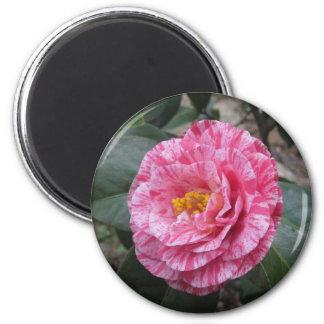 Imã Flor branca listada vermelho do japonica da