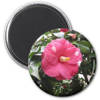 Imã Flor branca manchada vermelho da camélia Marmorata