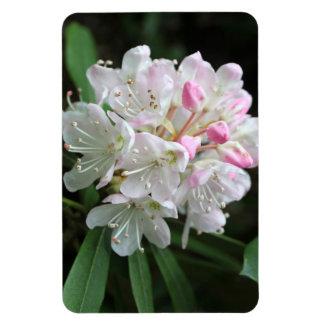 Ímã Flor cor-de-rosa bonito do rododendro