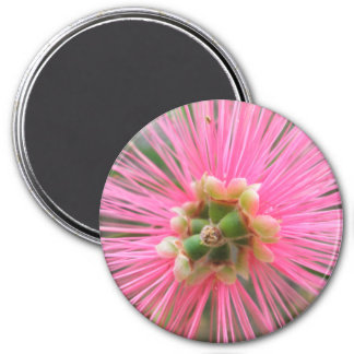 Imã Flor cor-de-rosa da árvore de goma