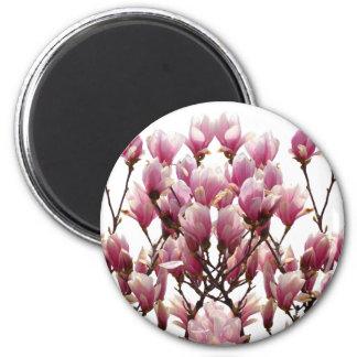Imã Flor cor-de-rosa de florescência do primavera das
